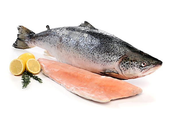 Big salmon fish and a fillet isolated on white